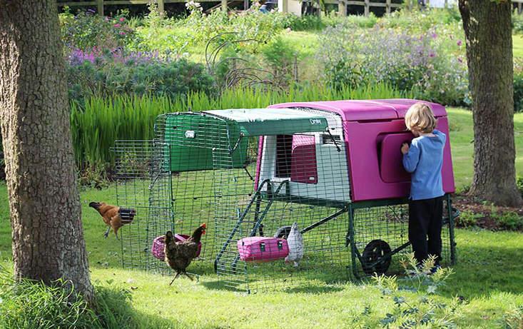 Fioletowe Eglu Cube z wybiegiem 2m w ogrodzie