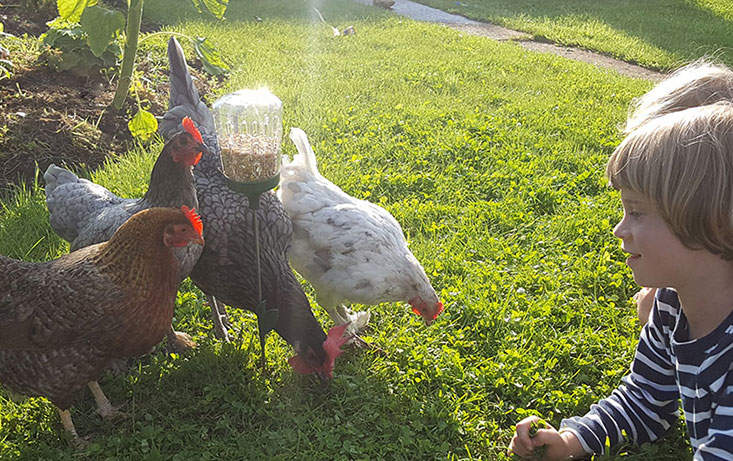 The Elvis Peck Toy lets you spend time with your chickens whilst they find their treats