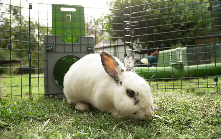 Zippitunnelen kan brukes til å gi kaninene tilgang til ferskt gress hver dag