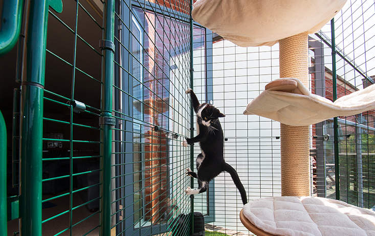 Unlike balcony netting or fences, the Cat Balcony Enclosure is completely secure and escape proof!