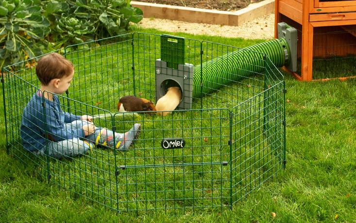 Vos enfants adoreront jouer avec leurs cochons d'Inde dans le Parc Zippi