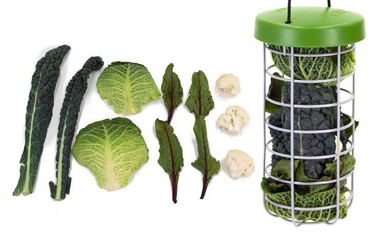 The design of the Caddi Treat Holder allows you to feed a wide variety of fresh treats to your chickens