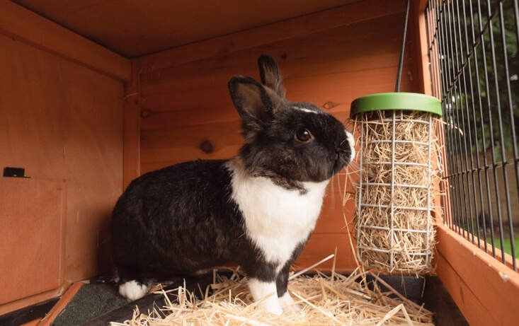 The Caddi also makes an excellent rabbit hay feeder that can be hung from your rabbit's wooden hutch or outdoor run