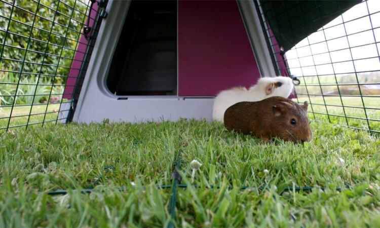 Underfloor wire in the run will prevent predators from tunnelling in