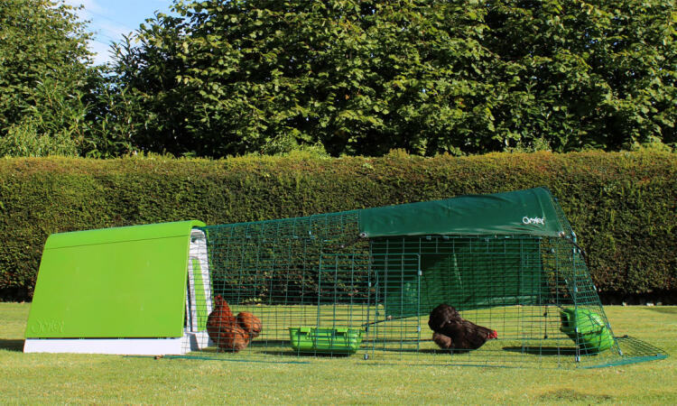 The Eglu Go is a modern chicken coop design that is really practical for backyard chicken keeping