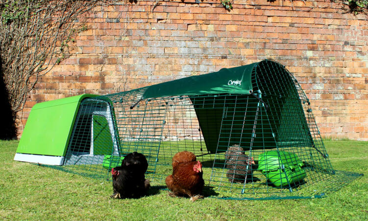 The door of the Eglu Go chicken run can be positioned to suit the layout of your backyard. Open the door to allow your hens to free range.
