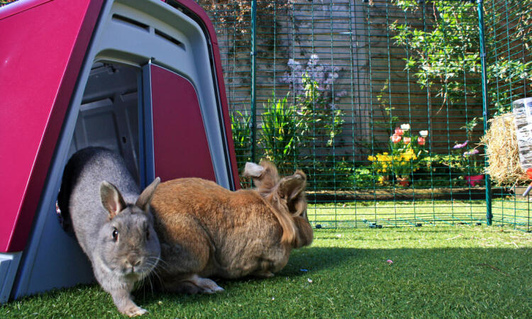 Placing a rabbit hutch in the outdoor rabbit enclosure will give your pet rabbits somewhere private to shelter