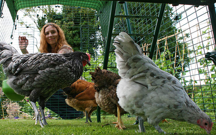 The large chicken coop run is predator proof so your flock can forage safely
