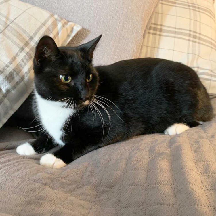 You can also use the blanket in your cat's bed, or on your own, to protect from cat fur and muddy paws.