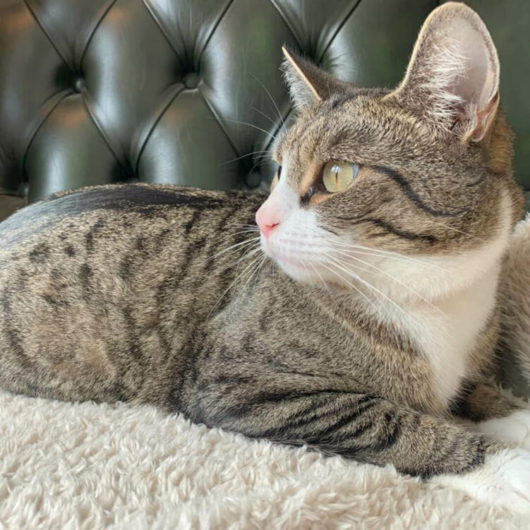 The super soft cat blanket can be placed on furniture (such as your cat's favourite chair!) for extra comfort.