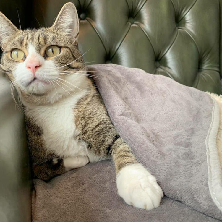 The cat blanket offers deluxe cosiness and warmth for colder months.