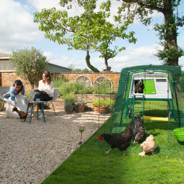 The large Eglu Cube chicken coop makes keeping up to 10 chickens easier than ever.