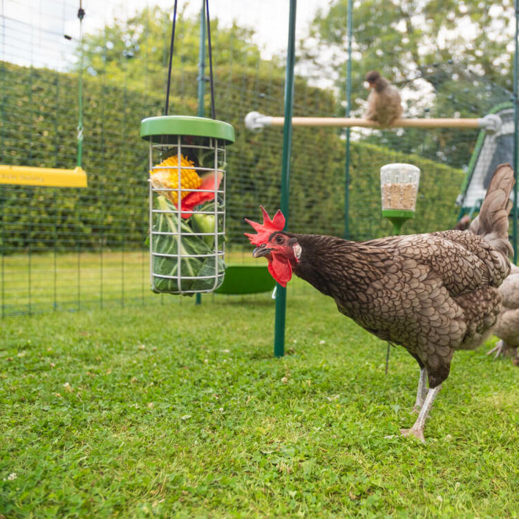 A Walk In Run is the perfect space to spoil your chickens with all their favourite toys and treats.