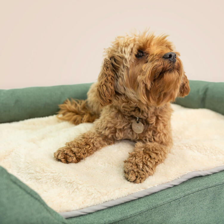 Place the blanket in your dog's bed for an extra cosy layer during the colder months.