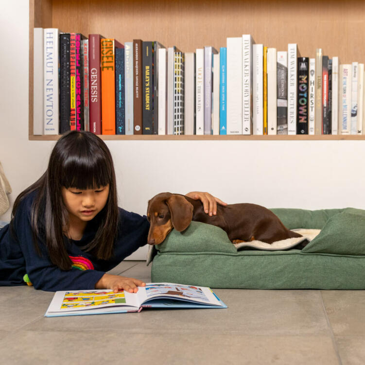 Make sure your dog gets the best possible sleep with Omlet Bolster Dog Beds.