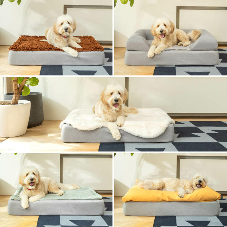 Woody the Goldendoodle loves all the Topology Toppers; from top left, the Microfiber, the Bolster, the Sheepskin, the Quilted and the the Beanbag.