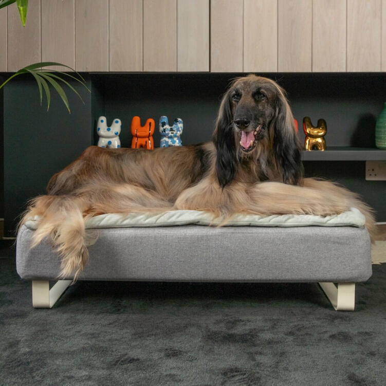 Thanks to the high quality mattress and the choice of different toppers, Topology is the perfect dog bed from puppyhood to old age.