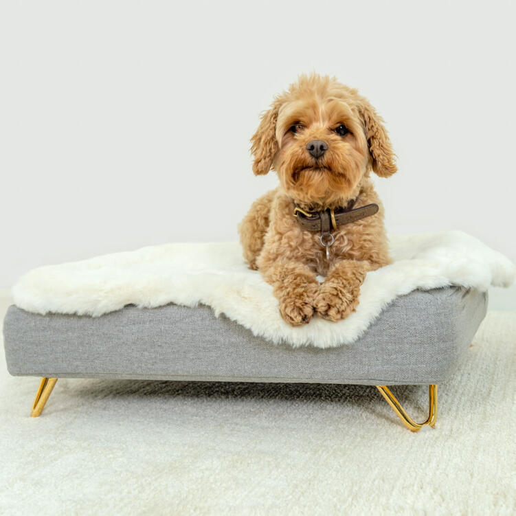 The luxurious, glossy gold feet, available in modern hairpins or ski-style rails, will add a touch of glamorous grandeur to your dog's bed.