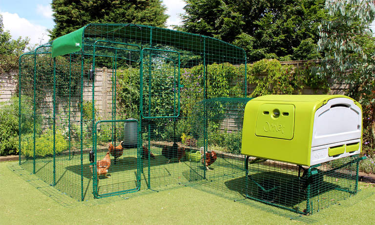 Un grand enclos Omlet relié à un Eglu Cube via l'enclos d'extension