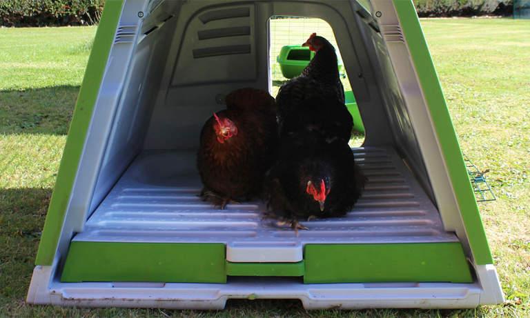 Dverghøner som vagler seg i hønsehuset Eglu Go