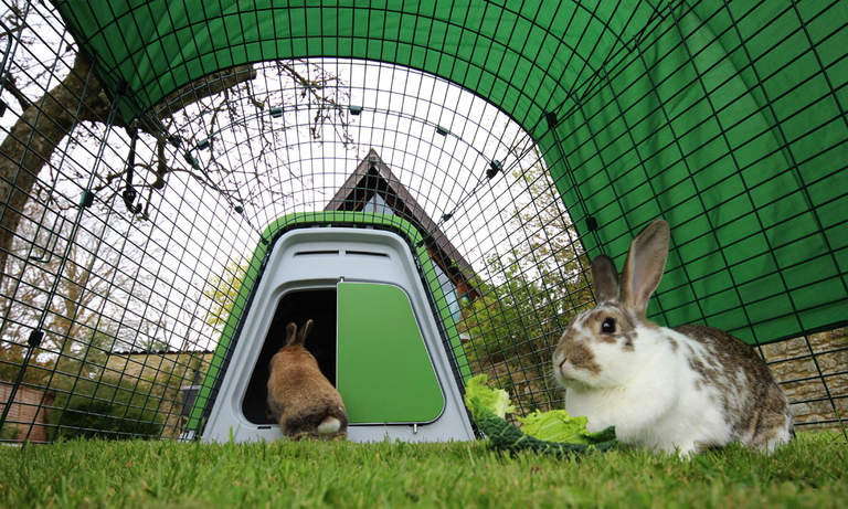 Rabbits can hop in and out of their house as they please!