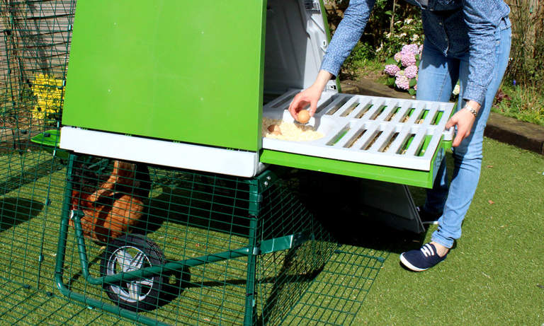 Eglu Go Up z wybiegiem 2m - wybieranie jaj z gniazda przez tylną klapę