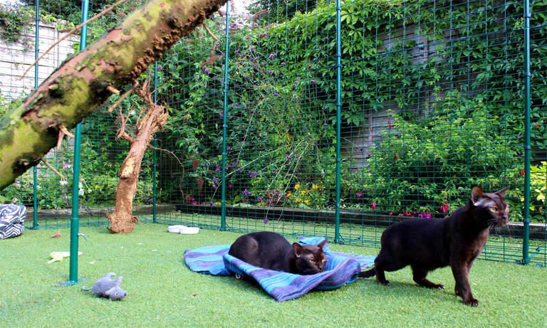 Des chats qui explorent l'intérieur de leur spacieux enclos Omlet