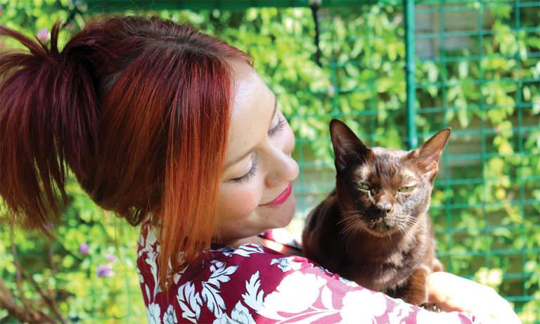 Zbliżenie na kota birmańskiego w jego kojcu