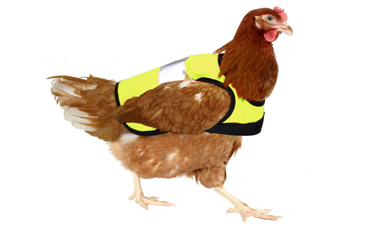 High-Vis Chicken Jacket in Yellow