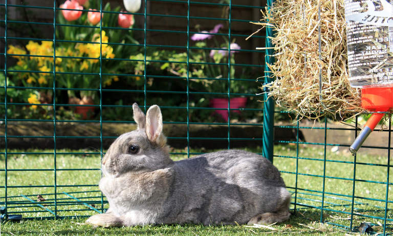 Rabbits big and small will love playing and relaxing in the large outdoor run