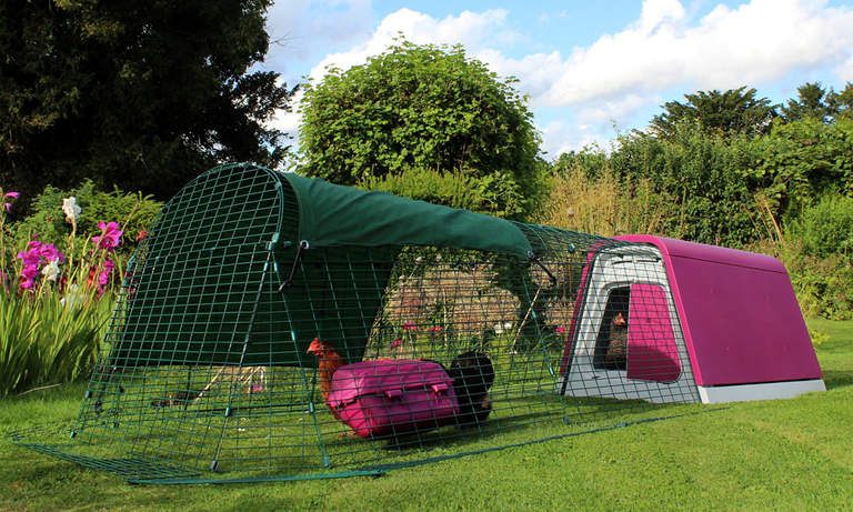 The Purple Eglu Go Chicken Coop in the garden
