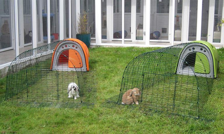 Två Eglu Classic-burar med gårdar och kaniner