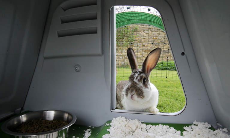 En kanin kiker inn i kaninhuset Eglu Go