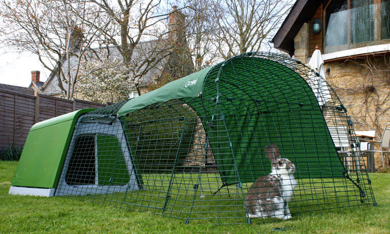 En kanin som sitter på gården till Eglu Go-buren