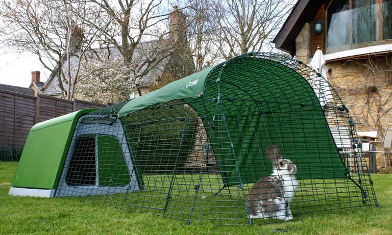 En kanin i luftegården til Eglu Go kaninbur