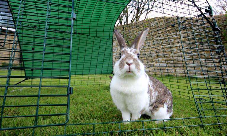Kaninen din vil kose seg ute i den trygge luftegården