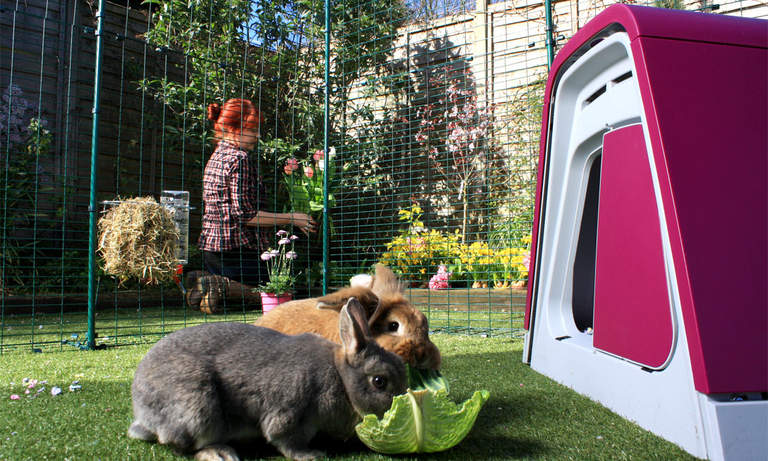 Bunnies will love spending time in this spacious outdoor rabbit run, while you can go about your daily chores