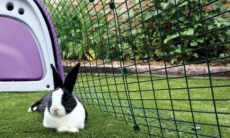 Vos lapins adoreront jouer et se prélasser dans l'enclos du Clapier Eglu Classic