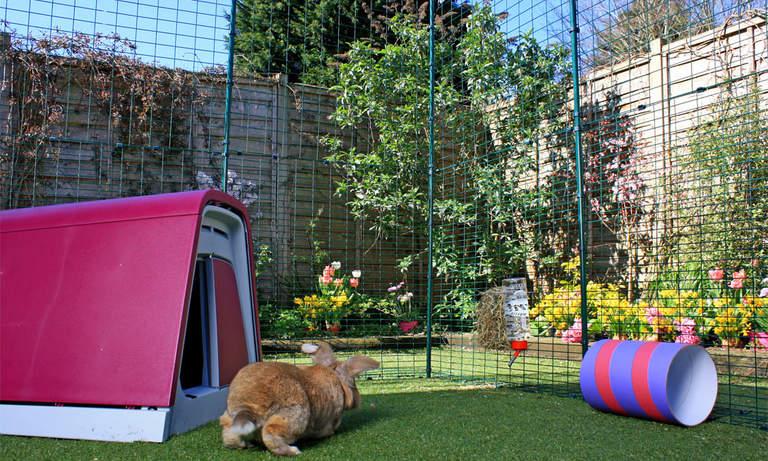 Kaniner älskar att hoppa runt på en stor gård