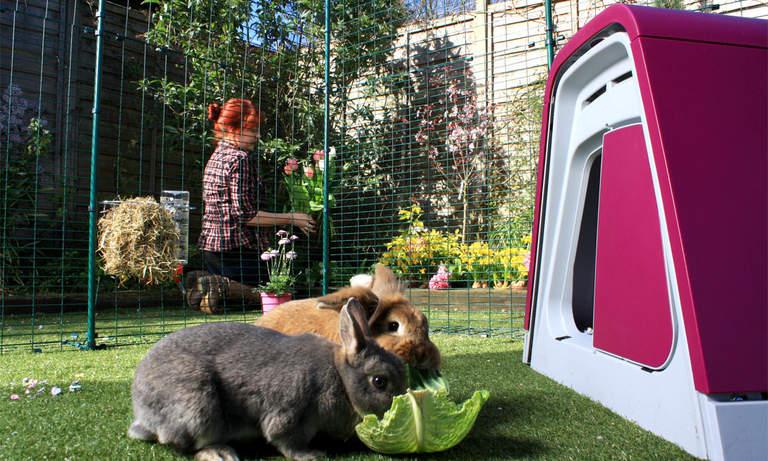 Kaniner älskar att tillbringa tid på sin gård medan du utföra dina dagliga sysslor