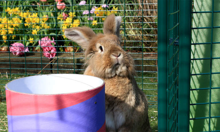 The Outdoor Rabbit Run is suitable for every rabbit breed and size