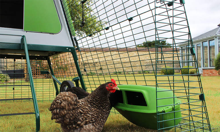 Durable plastic feeders and drinkers are included with the Eglu Go Up chicken tractor