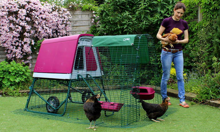 The portable chicken coop features a predator proof run and looks great in your backyard