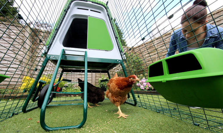 Kurczaki na swoim wybiegu Eglu Go Up