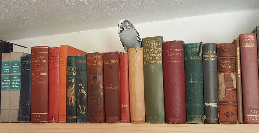 parakeet perched on books