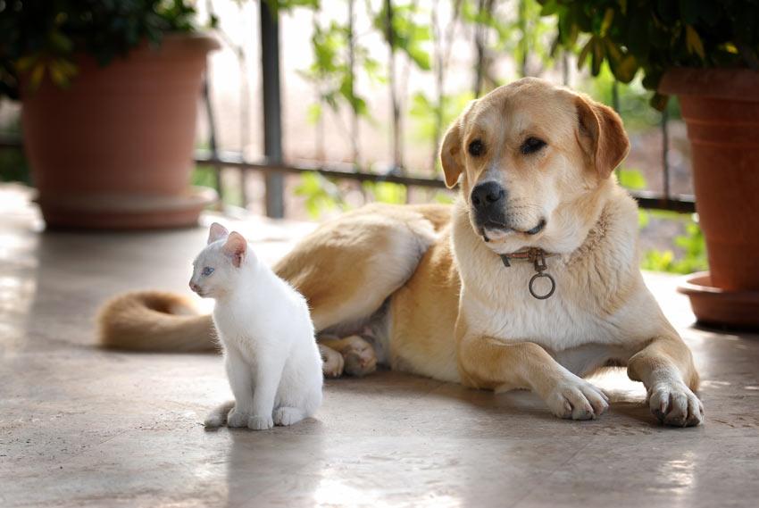 Ein Hund und eine Katze, die sich gut verstehen