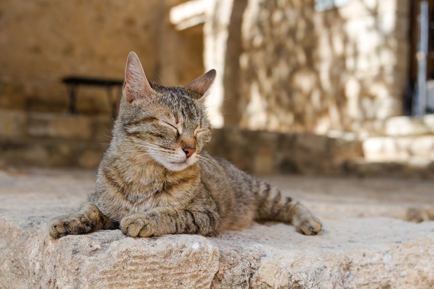A Greek cat basking in the sun