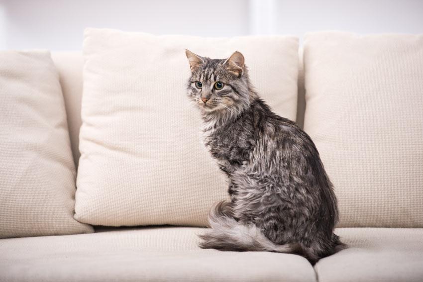 A beautiful grey cat sitting on the sofa