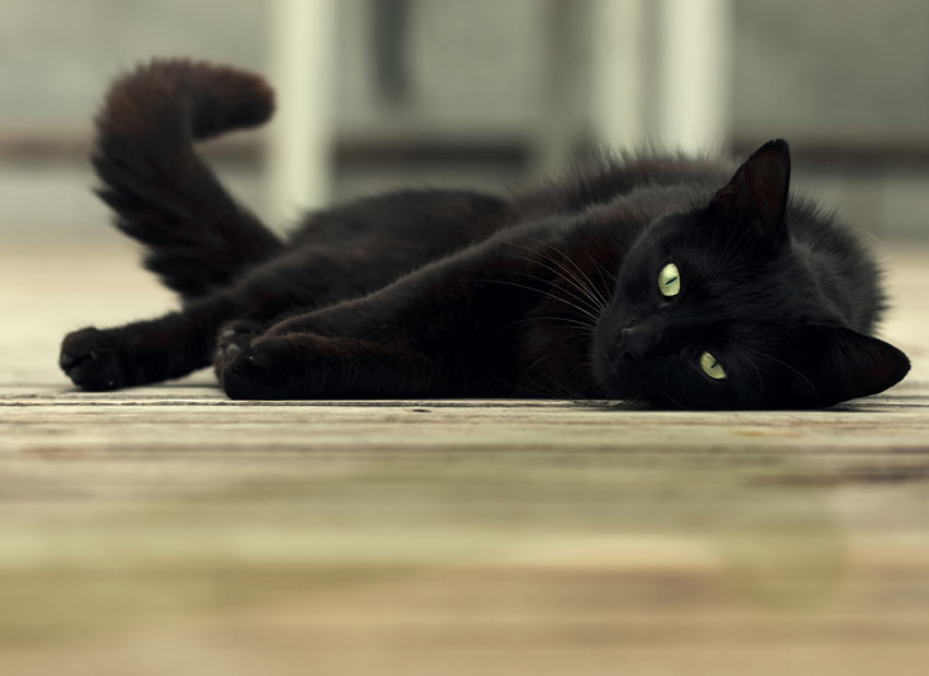 A black cat with beautiful green eyes stretched out across the floor
