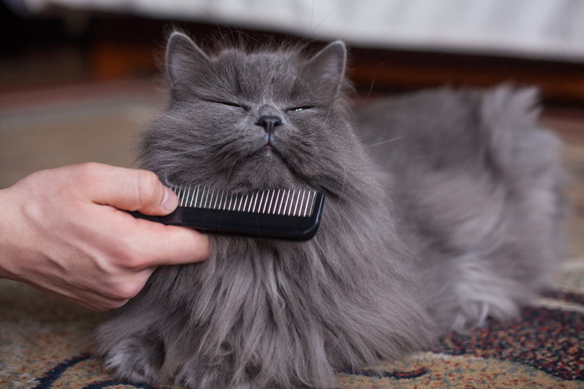 A cat enjoying being combed